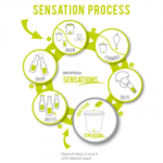 sensation_process